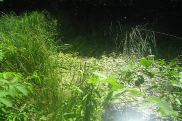 dode plekken in gras